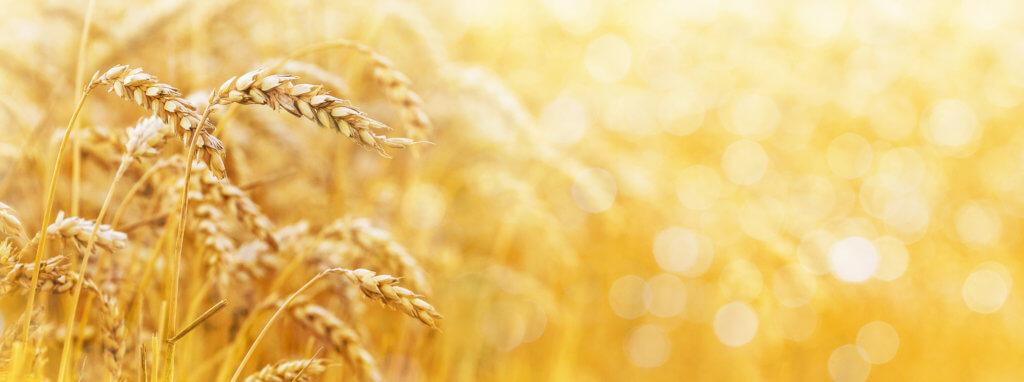 Cours des matières premières Agritechtrade