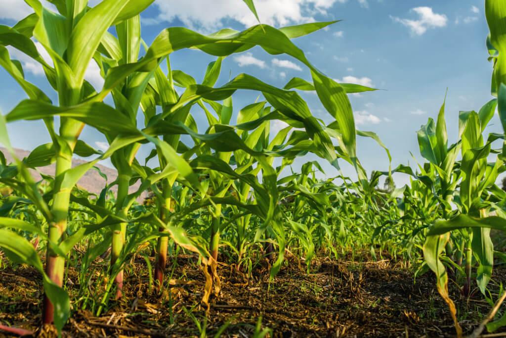 plateforme cours matieres premieres agricoles